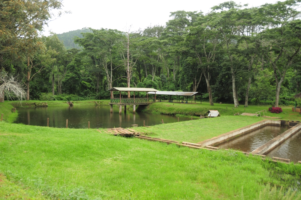 Ku chawe trout farm and the zomba plateau africa trip - Trout farming business family mountains ...